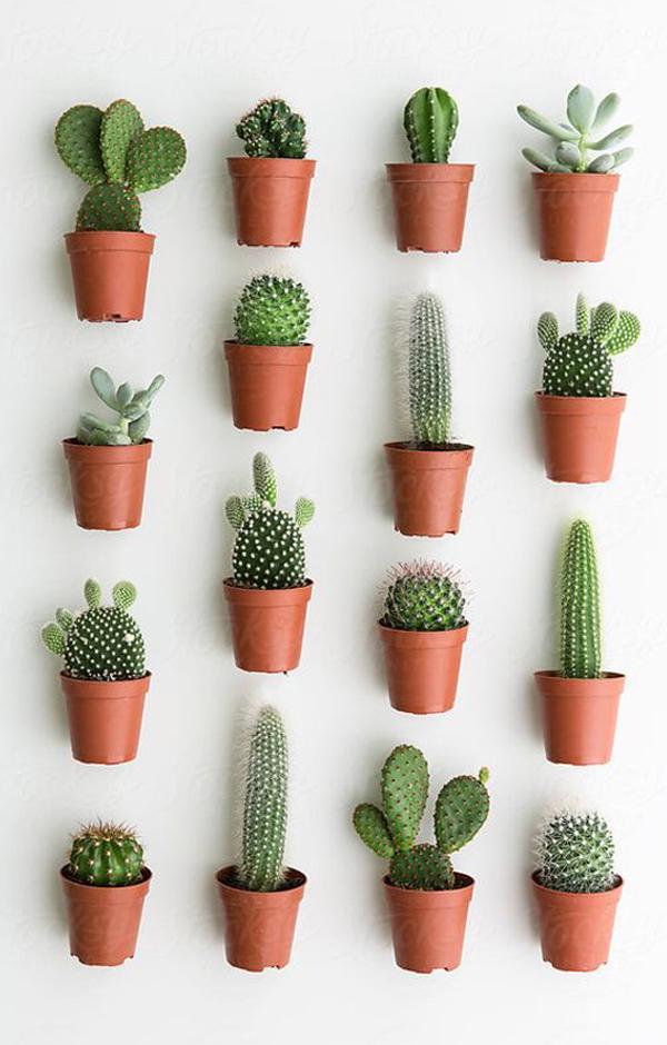 Cactus-wall-decor-collection