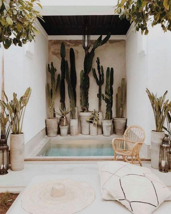Pool-with-arounding-kaktus-plants