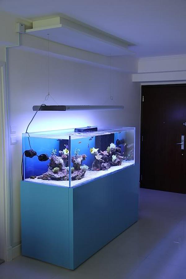 aquarium-with-blue-LED