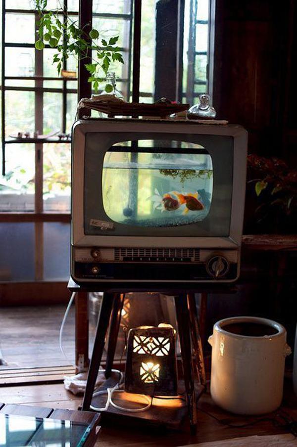 creative-aquarium-ideas