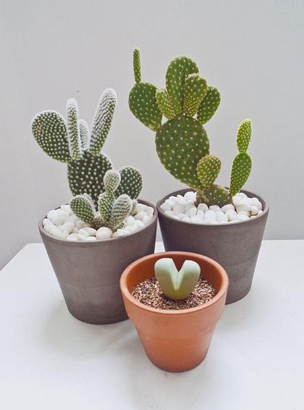 cute-cactus