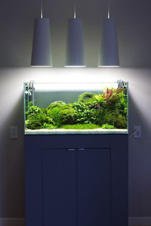 fish-keeping-with-beauty-lamps
