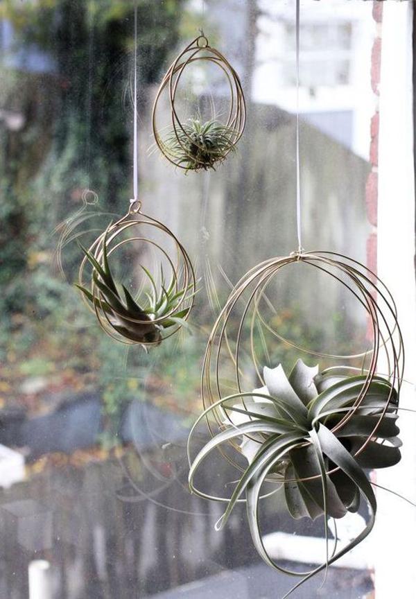 hanging-tilandasia-plants