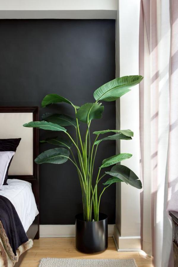 Lompong-indoor-plants