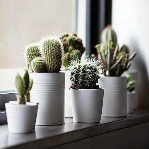 Succulents-plants