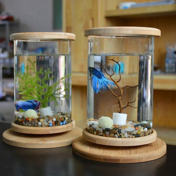 two-tube-aquarium