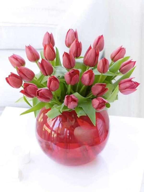 Tulip-in-the-growing-pot