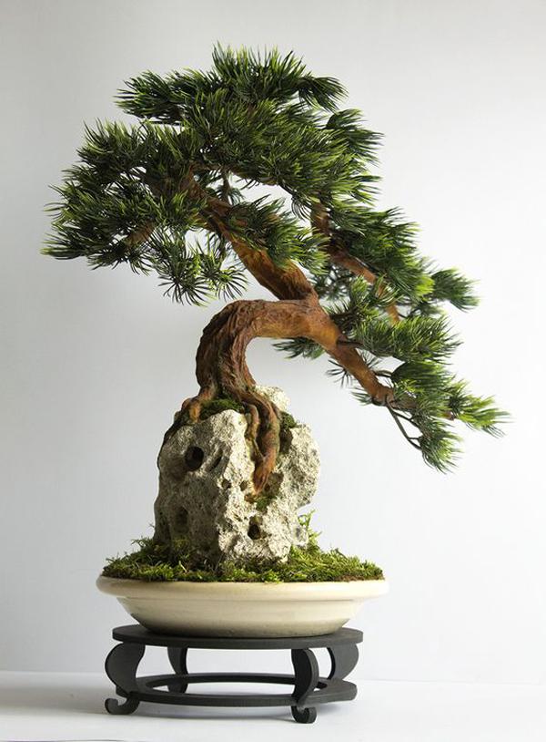 bonsai-indoor-plants