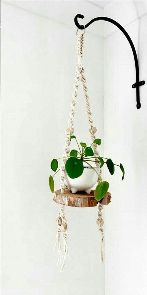 chinese-money-hanging-plants