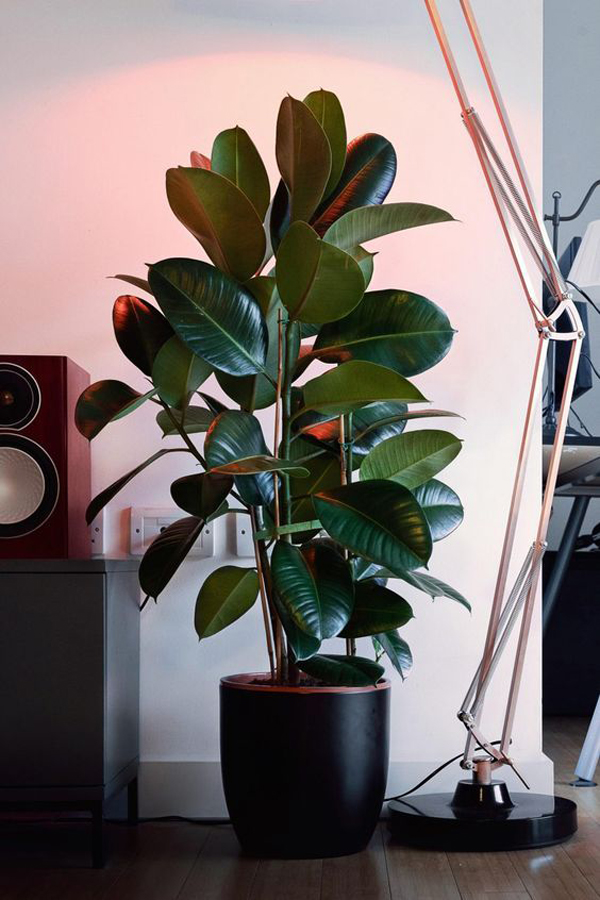 Lush-indoor-plants-ideas-to-decorate-your-home