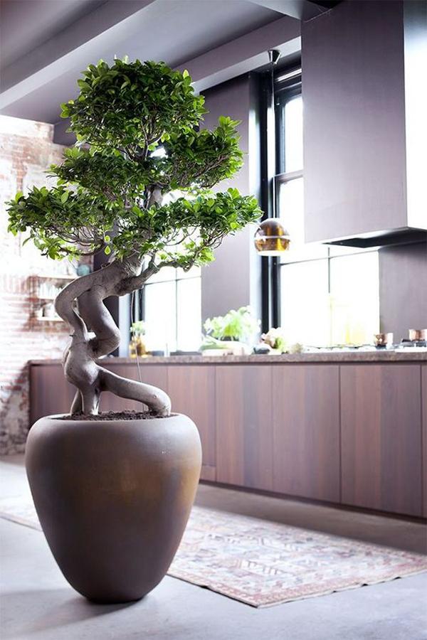 perfect-summer-indoor-plants