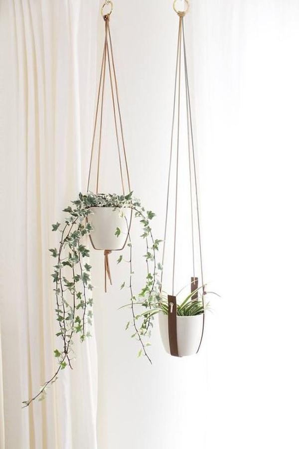 modern-style-hanger-plants