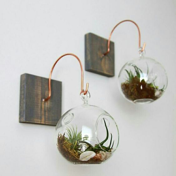 plant-wal-decoration-with-beauty-bubble-glass