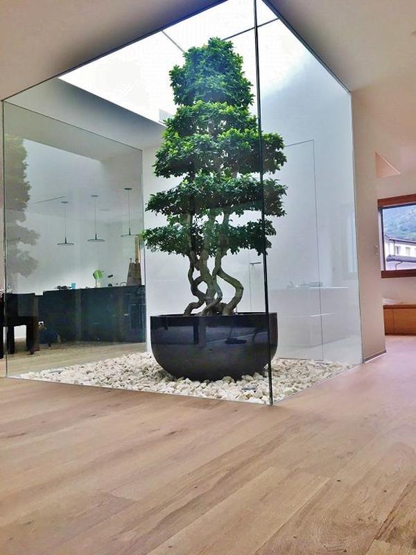 tropical-exotic-indoor-plants
