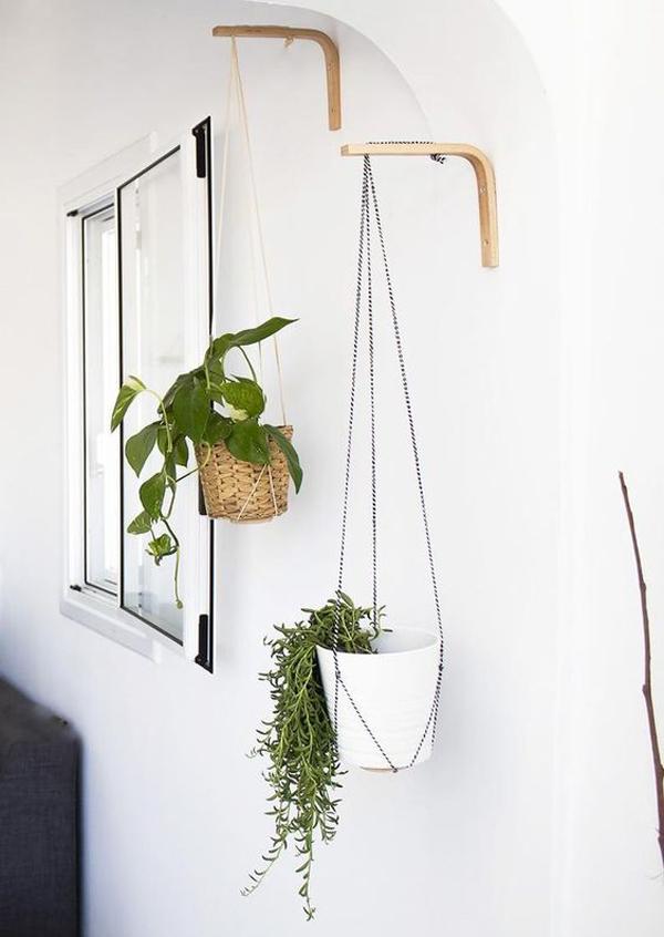 wall-hanging-plants