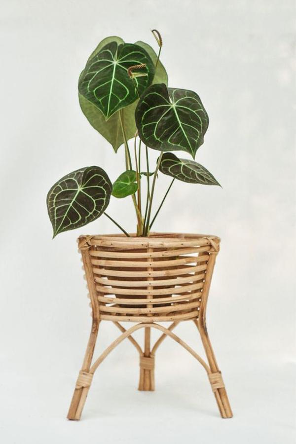 Anthurium-in-rattan-planter