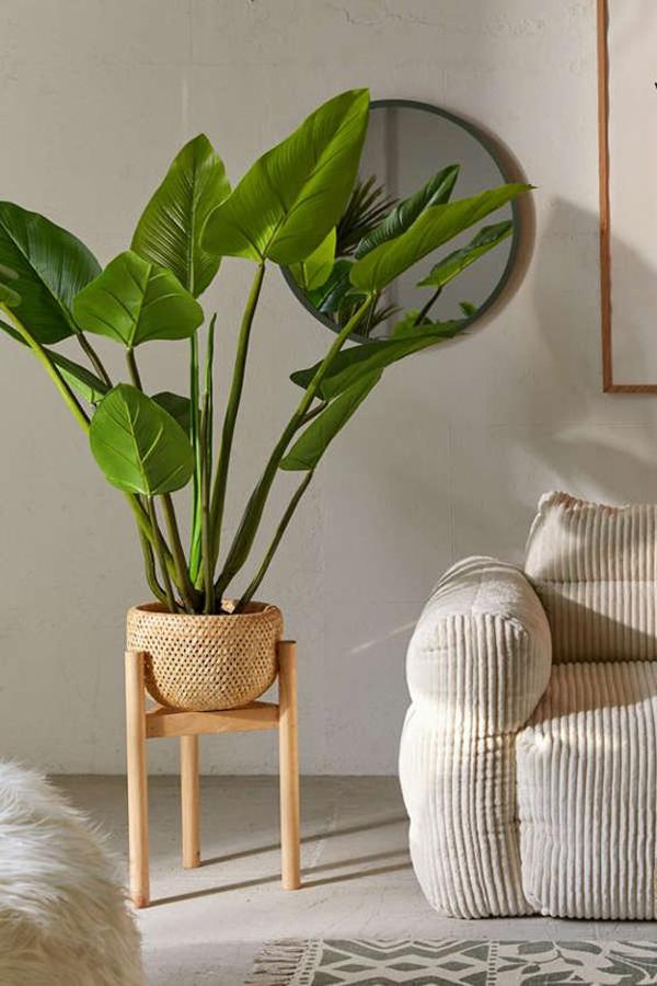 Rattan-standing-curcuma-plant