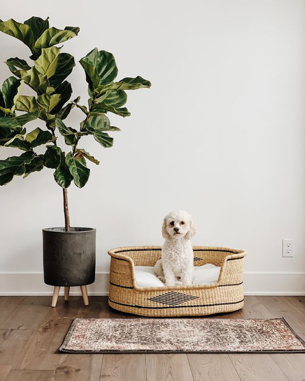 dog-bed-placed-near-the-pot-plants
