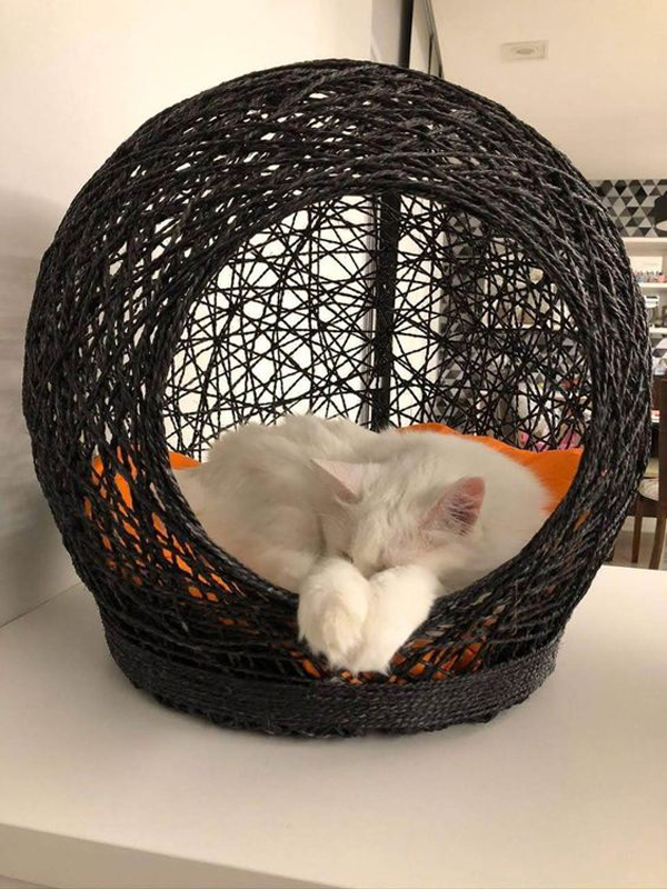 Black-cat-basket