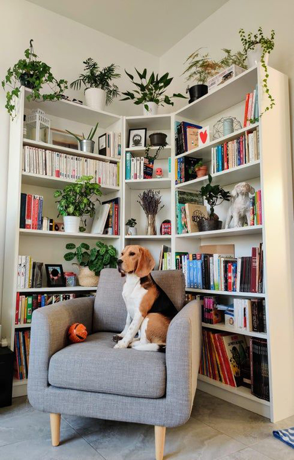 Bookcase-with-plants-decoration