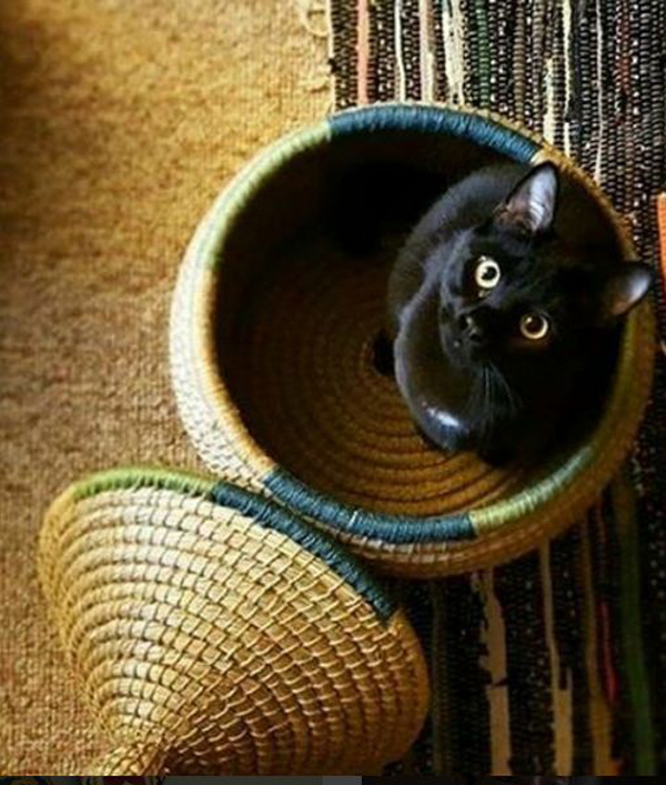 Cat-basket-with-a-lid