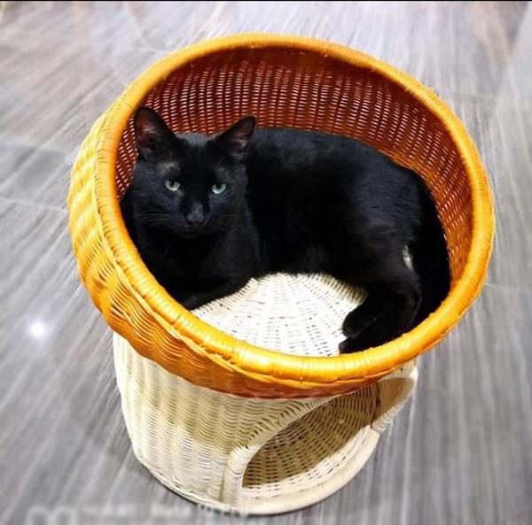 Cat-basket-with-natural-rattan