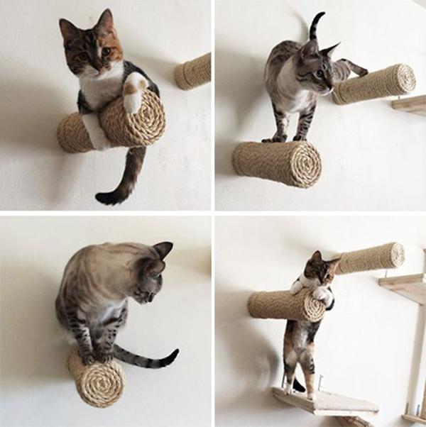 Cat-climbers-toys