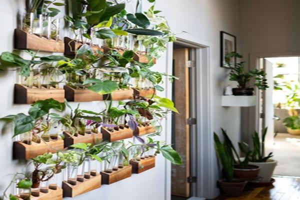 Gorgeous-green-plants
