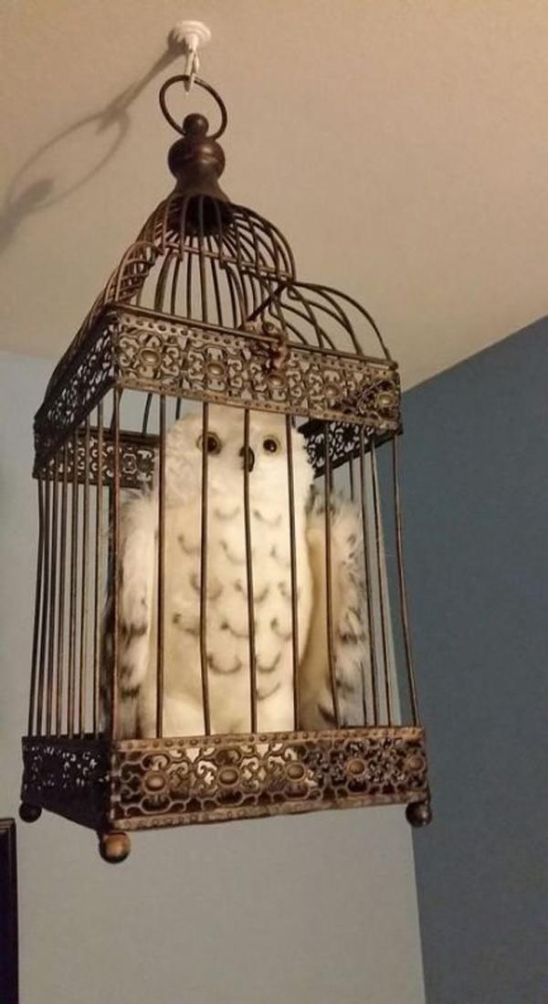 Harry-Potter's-white-owl