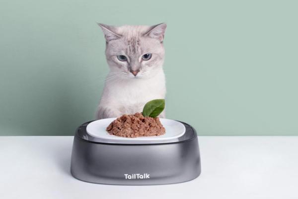 Cute-cat-bowl