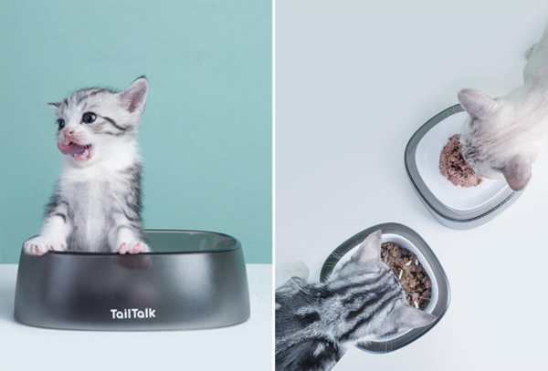 Cat-bowl-with-silver-color