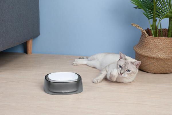 Adorable-cat-bowl