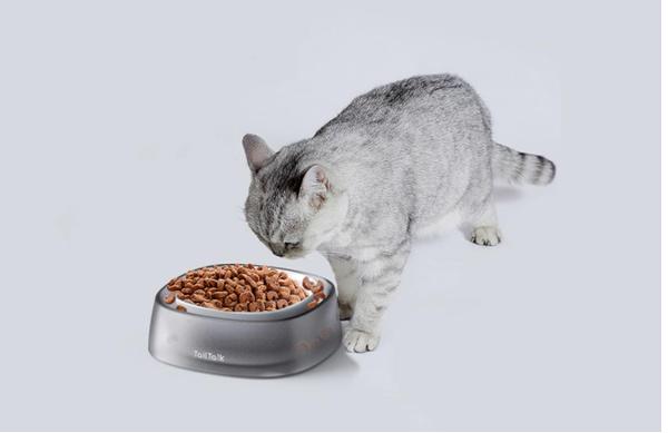 Expensive-cat-bowl