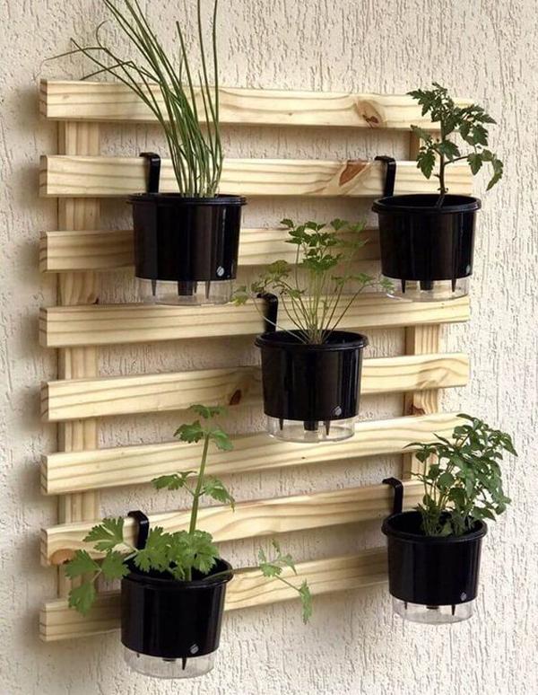 Shelf-plant-ideas-for-vertical-garden