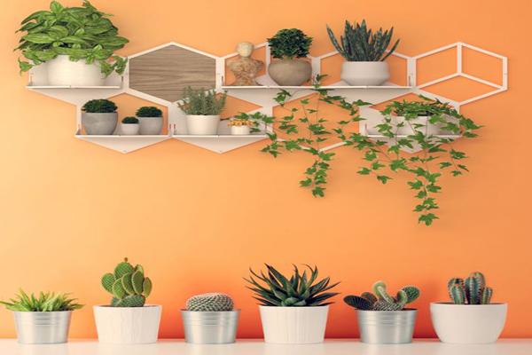Balcony-vertical-garden-wall-with-simple-shelf