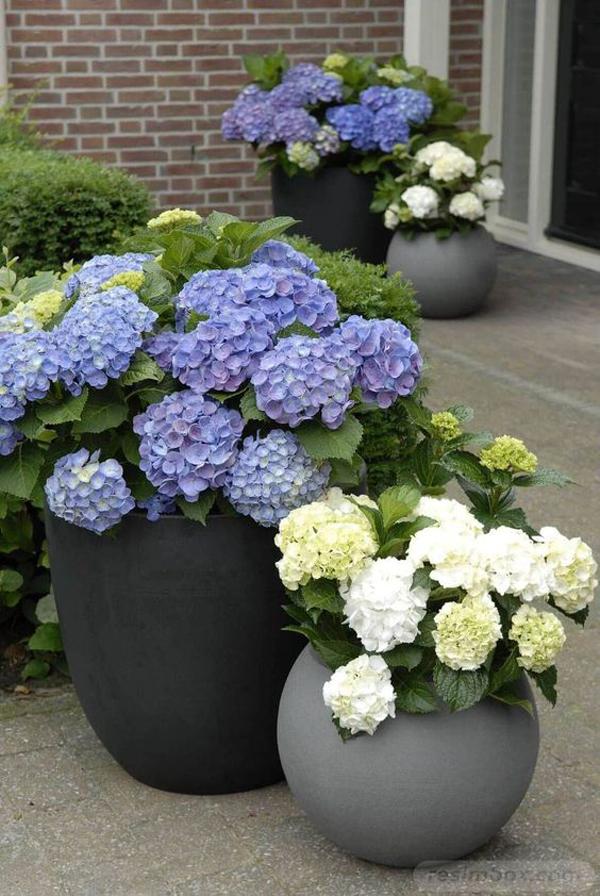 Beautiful-outdoor-planter-ideas