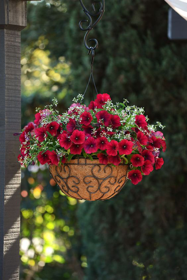 Hanging-Petunias-outdoor-planter