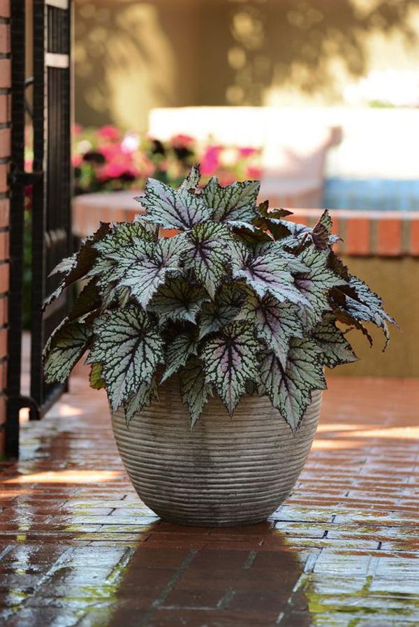Mini-outdoor-planter-size