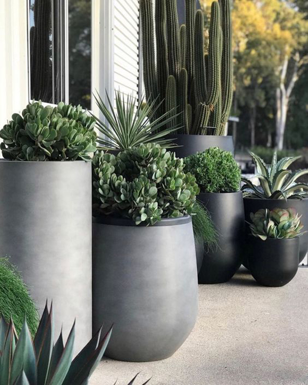 Outdoor-planter-with-black-pot