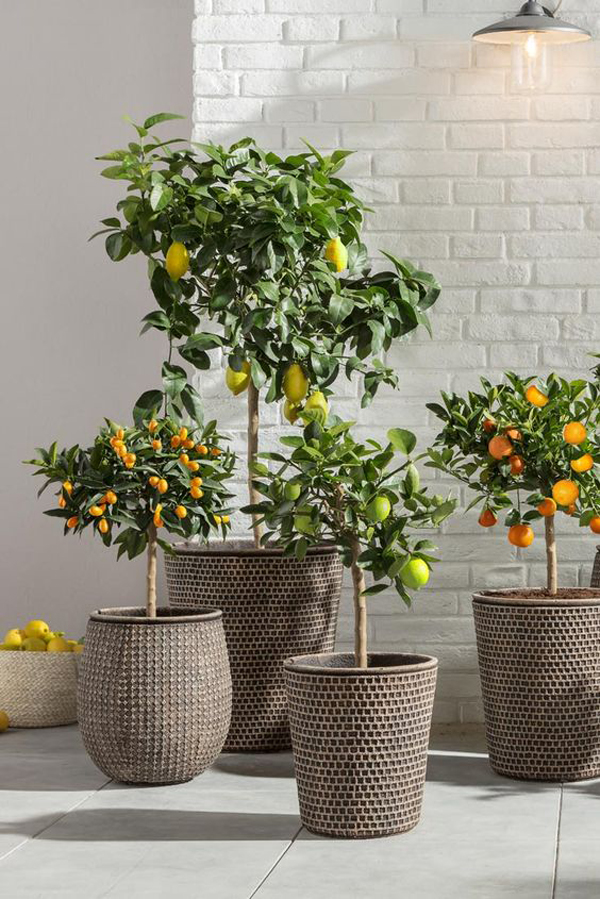 Outdoor-plants-with-fruits-plants