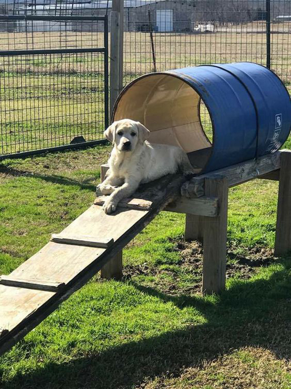 Discarded-barrels-for-dog-playground