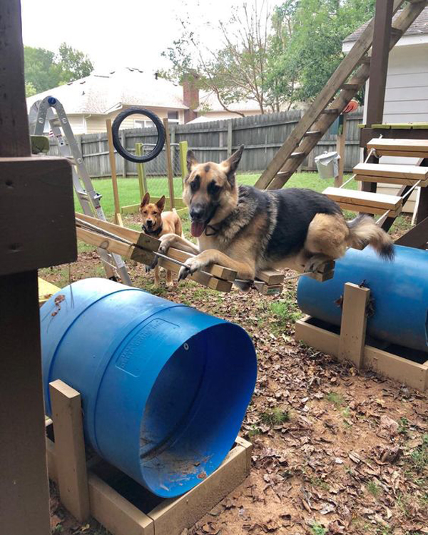 Dog-areas-in-backyard