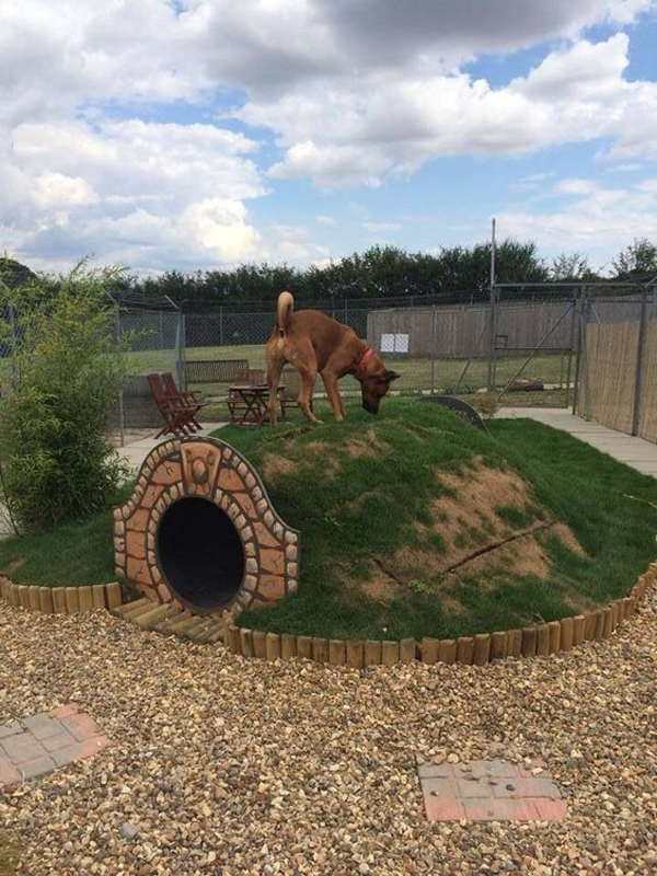 Hobbit-hole-for-dog-play-area