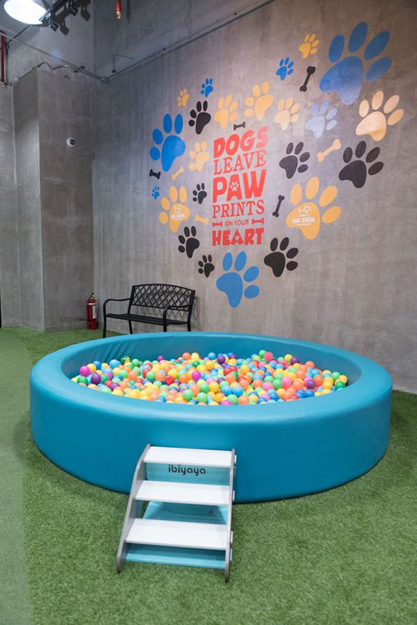 Round-swimming-pool-for-dogs