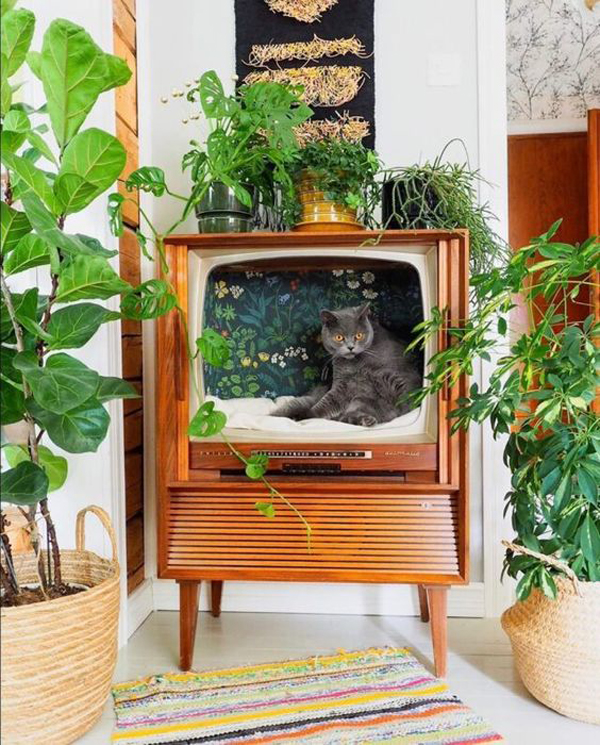 A-TV-cat-bed-ideas