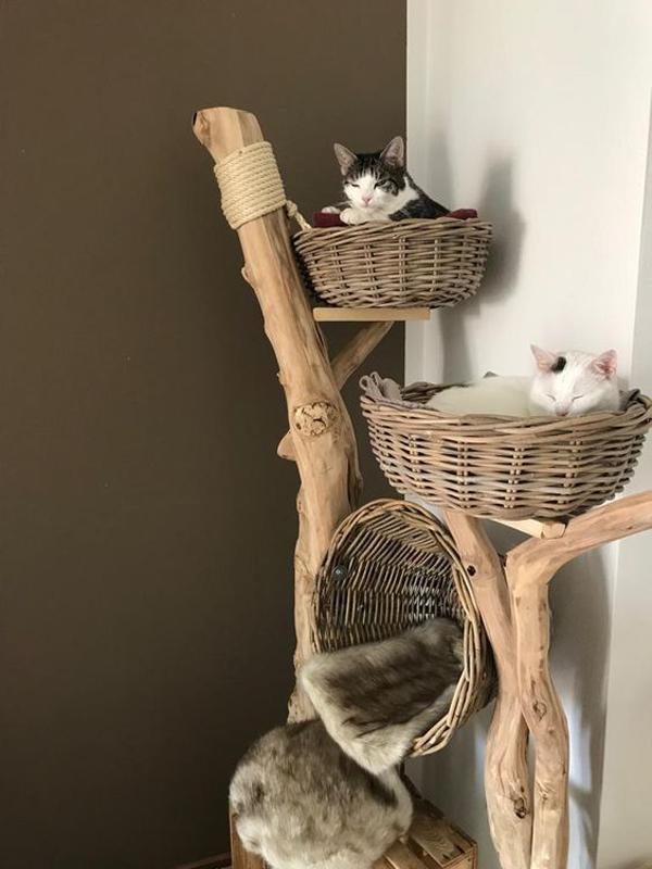 Brilliant-ideas-for-cat-bed