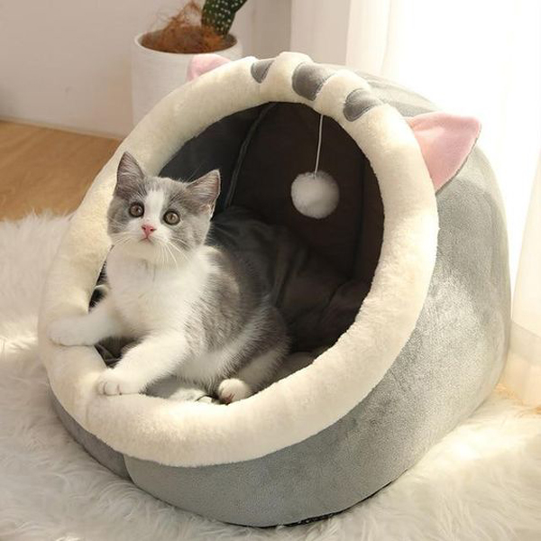 Comfortable-a-cat-bed-with-a-pillow-box