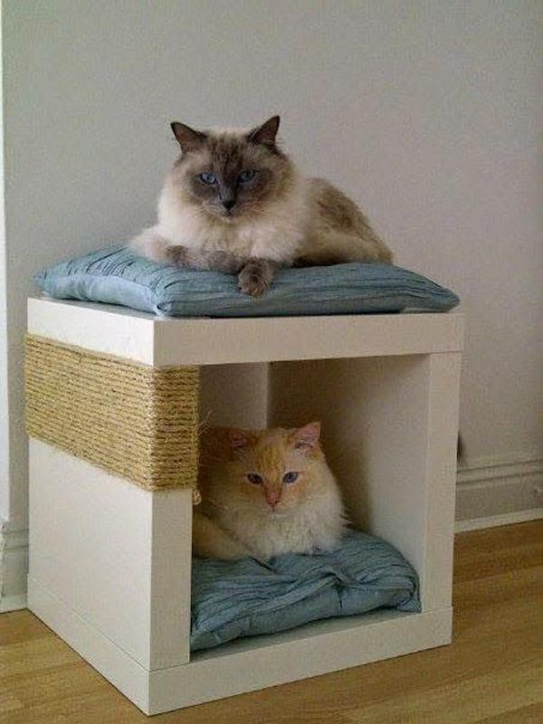 Double-cat-bed-design