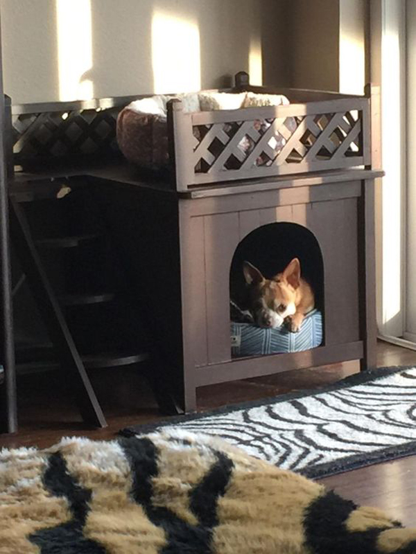 Mini-dog-house-for-your-puppy