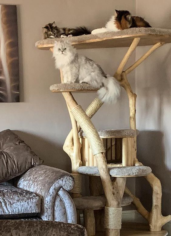 Wooden-cat-tree-for-your-lovely-cats